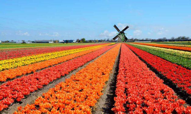 Waarom Nederland weer meer toeristen trekt
