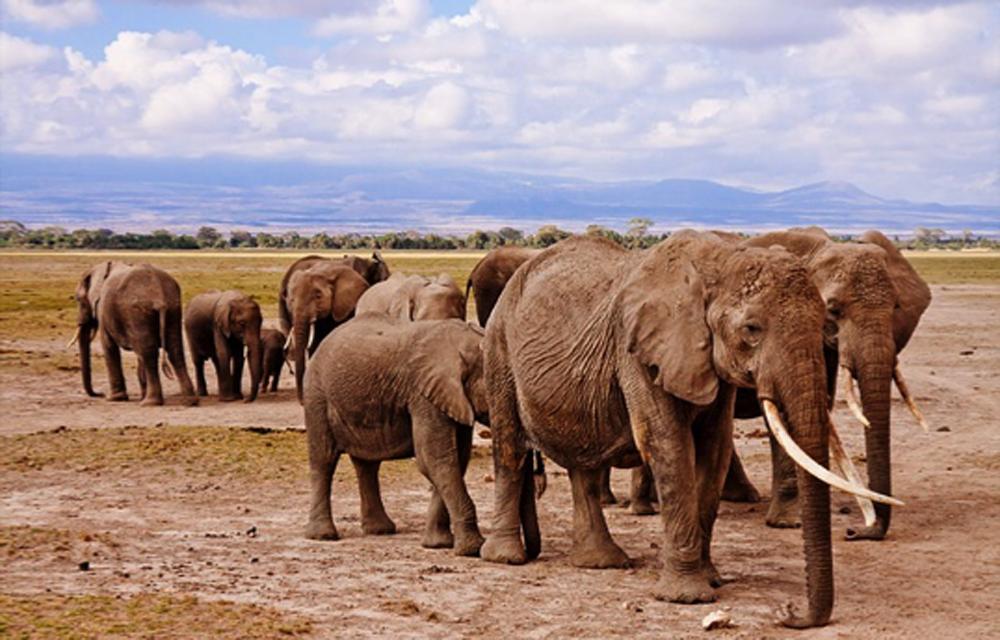 Het plannen van een safari